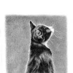 阪本俊光 路地裏の猫展