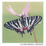 第2回糠地郷蝶のはがき絵大賞展